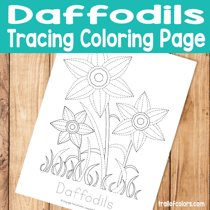 Daffodils Tracing Coloring Page