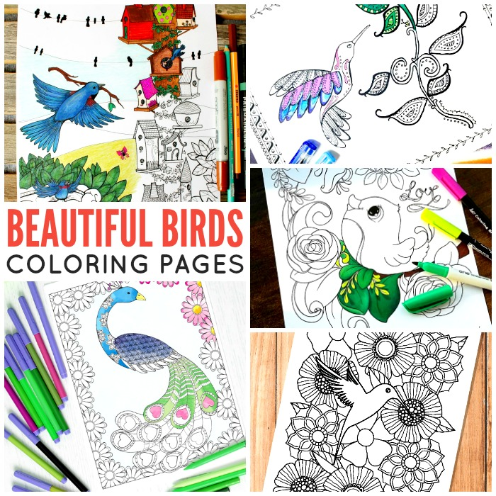 Beautiful Birds Coloring Pages for Adults