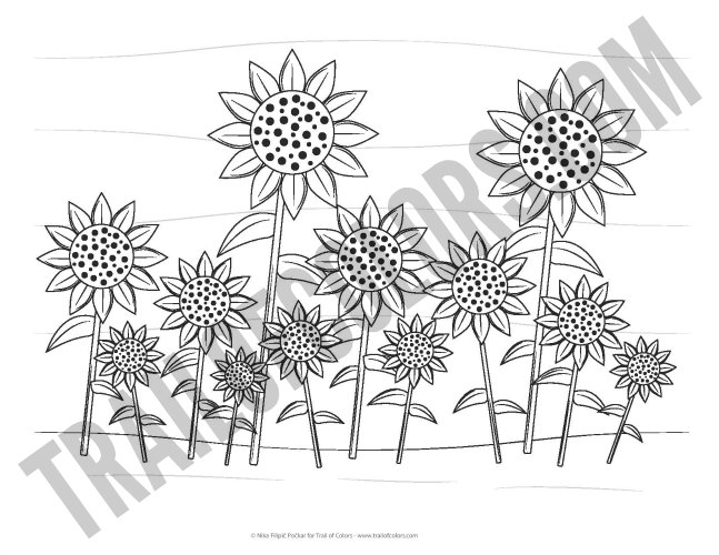 Lovely Sunflowers Coloring Page free printable Trail Of Colors