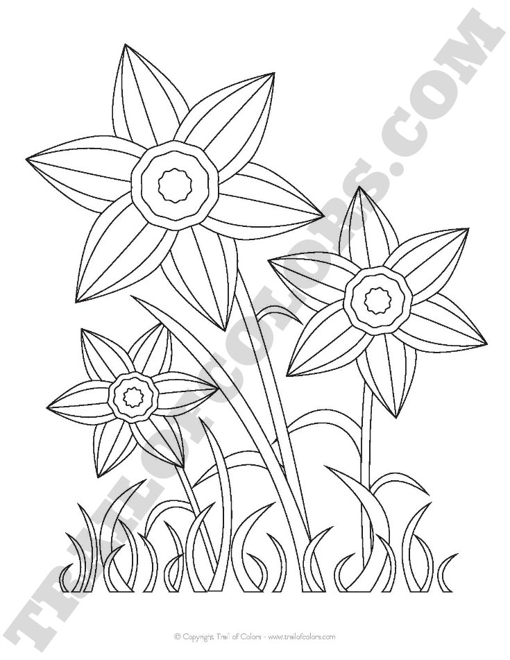Daffodils Coloring Page For Kids Free Printable Trail